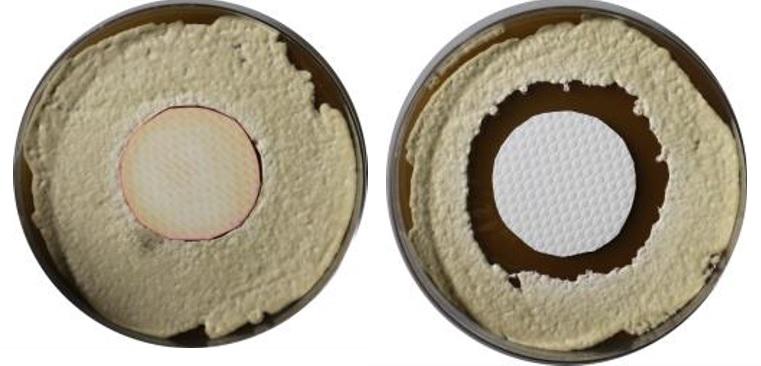 Muestras de pruebas de laboratorio del retardante al hongo de Megaplast vs la competencia